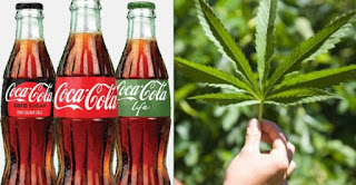 "You May Soon Be Drinking Cannabis-infused ""Coca-cola"""
