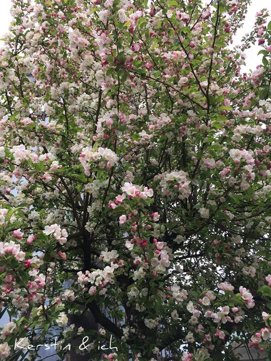 Blüten Baum Natur