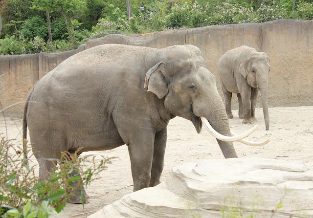 IMG 4046 - Wildlands Adventure Zoo Emmen