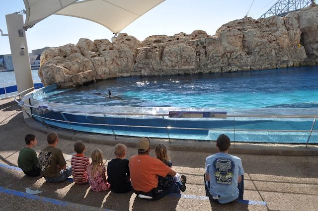 Best Aquariums in the USA: Texas State Aquariums