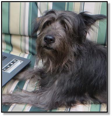 Lotte sucht sich Hundefutter aus