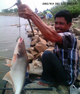 Master Essen Ikan Patin Harian