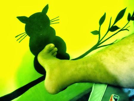 fungsi kucing
