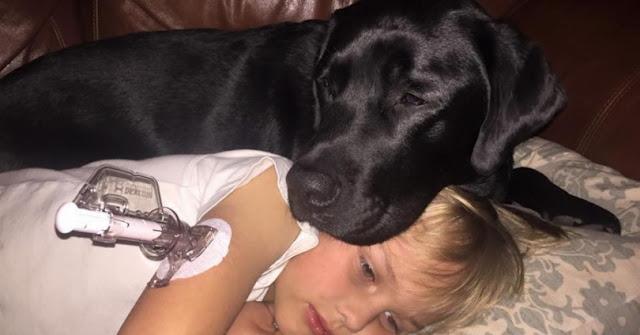 Ο σκύλος της ήταν ανήσυχος στη μέση της νύχτας. Όταν έτρεξε στο γιο της, δεν πίστευε στα μάτια της!