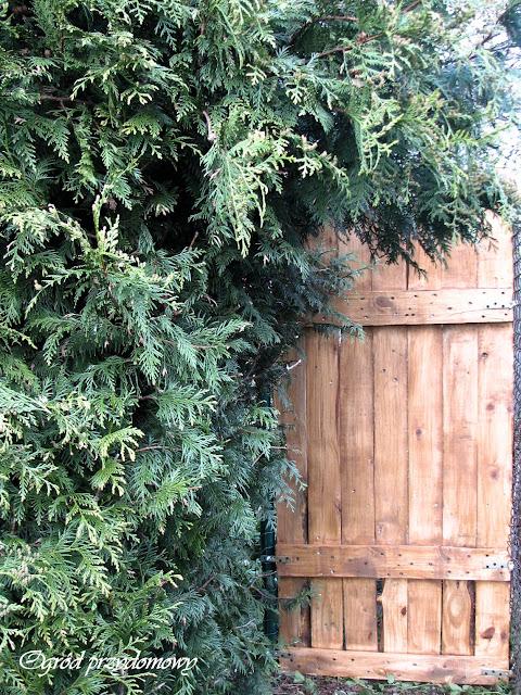 drzwi do tajemniczego ogrodu, tajemniczy ogród, ogród przydomowy