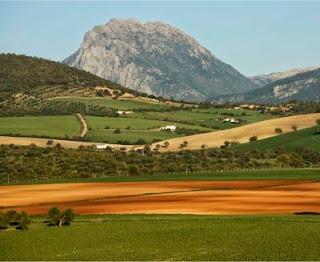 Los monocultivos y la deforestación amenazan  a las reservas más importantes de Andalucía.  Los parques naturales Sierra de Grazalema  y Los Alcornocales, como vemos en la foto,  se encuentran cercados por la deforestación  que avanza arrasando.