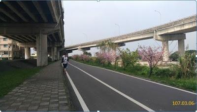 頭前溪橋河畔騎自行車賞櫻花廊道