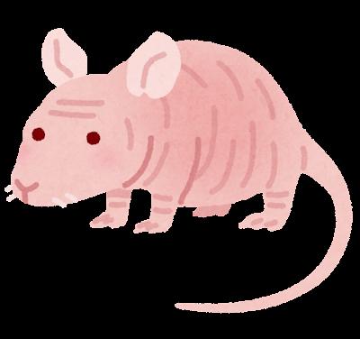 ヌードマウスのイラスト