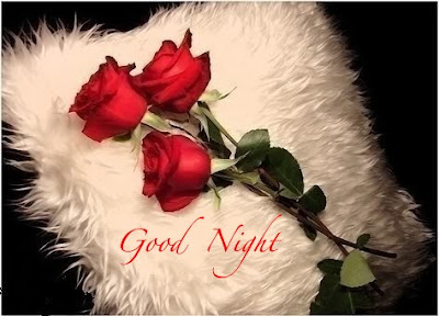 Romantic Good Night Love Quotes: good night with best red rose
