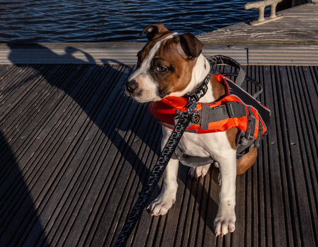 Photo of Ruby out on the pontoons in her lifejacket