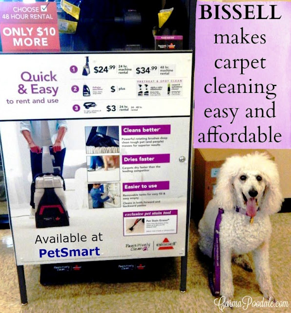 Carma Poodale Pawsitively Clean Bissell Carpet Cleaner