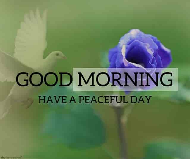 good morning images with blue rose and bird