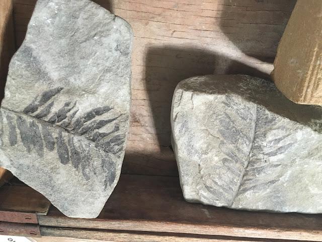 Dinosaur Digs at The Caves