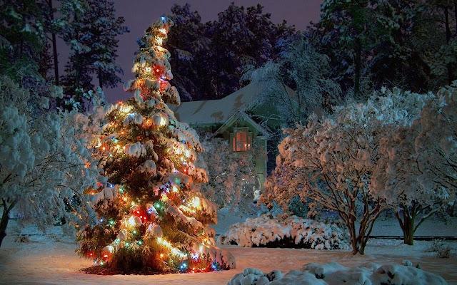 best-christmas-tree