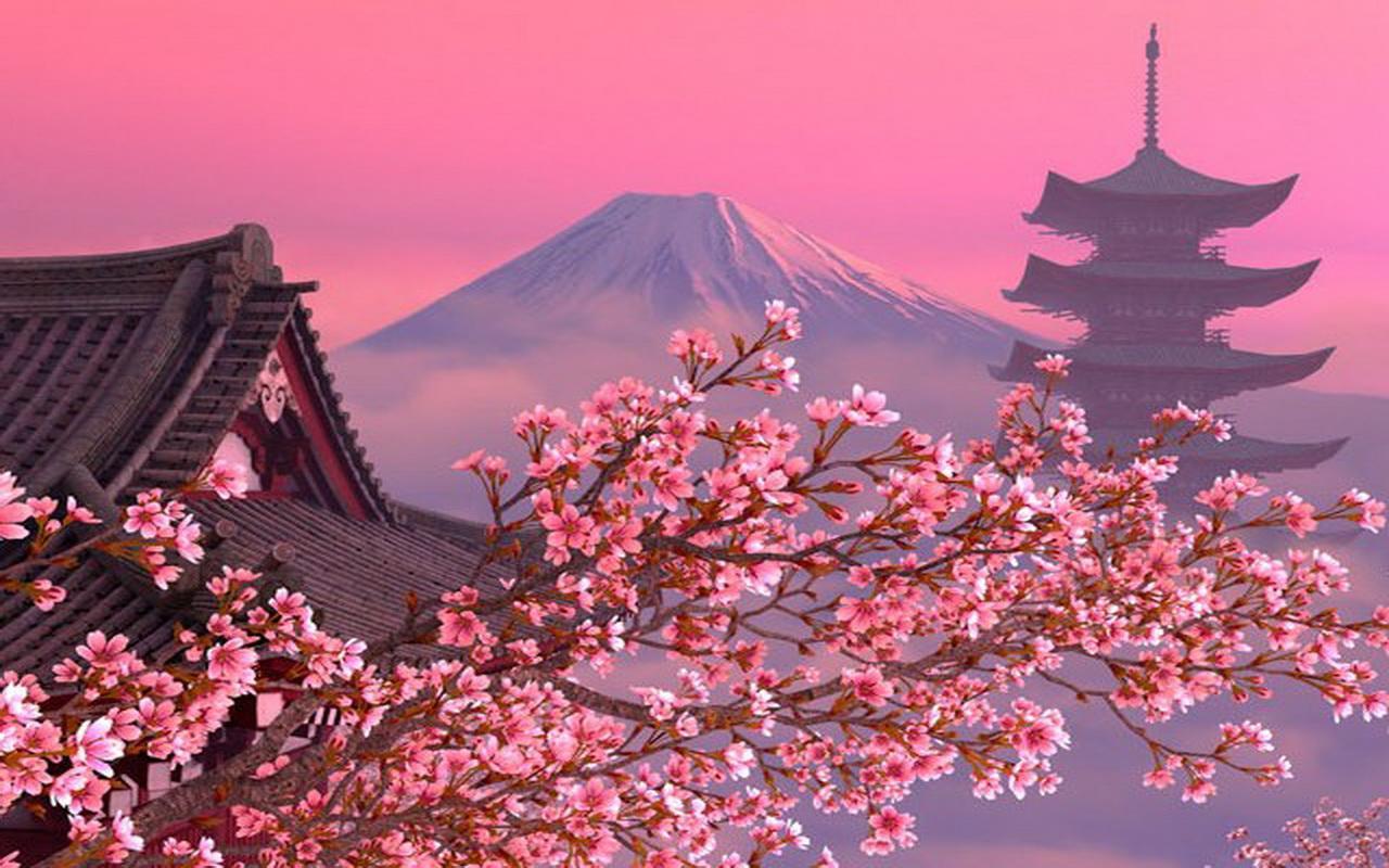 Cherry Blossom Wallpaper Hd Hanami Japon 233 S Y Sus Tipos De Flores