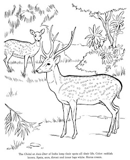Wild Animal Deer Coloring Pages For Print