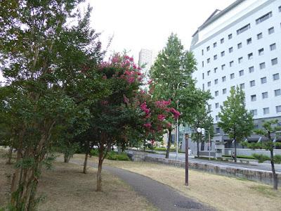 大阪城公園のサルスベリ 背景(大阪府警察本部)