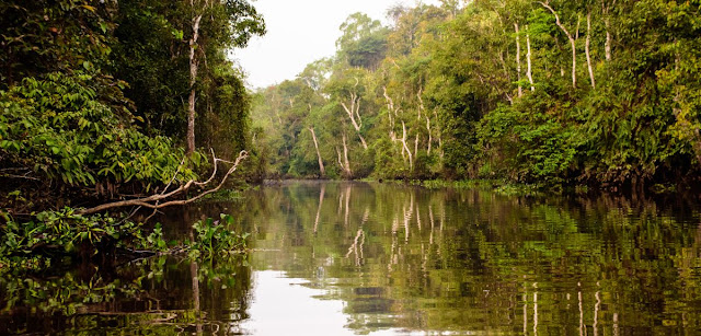 New approach predicts threats to rainforests