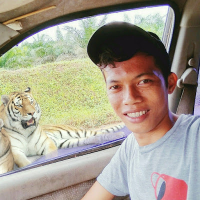 Gambar: Hasil edit ( Berfoto buka kaca mobil didekat harimau) HIMBAUAN: JANGAN TIRU ADEGAN INI DILOKASI ADA HARIMAU. BERBAHAYA!!! INI HANYA EDITAN.