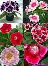 menanam-tanaman