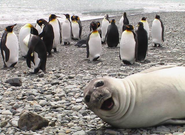 foto lucu saat hewan ikut berselfie bersama manusia-4