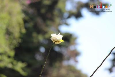 Flower standing tall