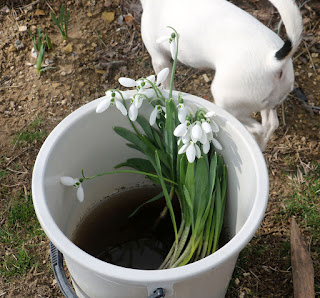 A bucket full of flowers to plant out