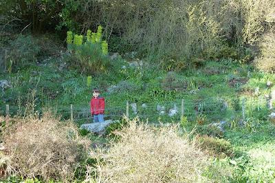 Highdown Gardens, Chalk garden