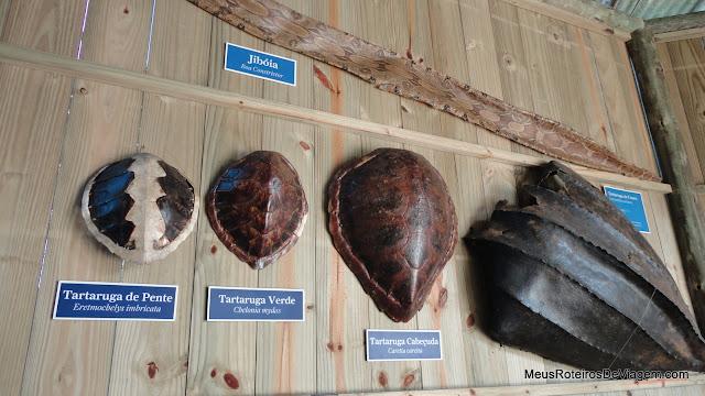 Cascos de tartarugas e pele de jibóia - Projeto Tamar