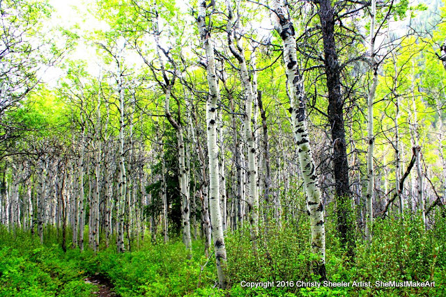 Continuing our hike returning to camp, the slender trunks of the aspen wait alongside the path.