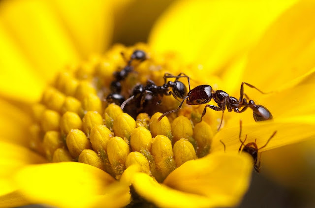 Ant Species Stay Healthy with Self-Made Antibiotics