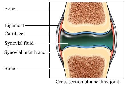 Pastile și unguente pentru tratamentul osteocondrozei cervicale - infoturism-fieni.ro