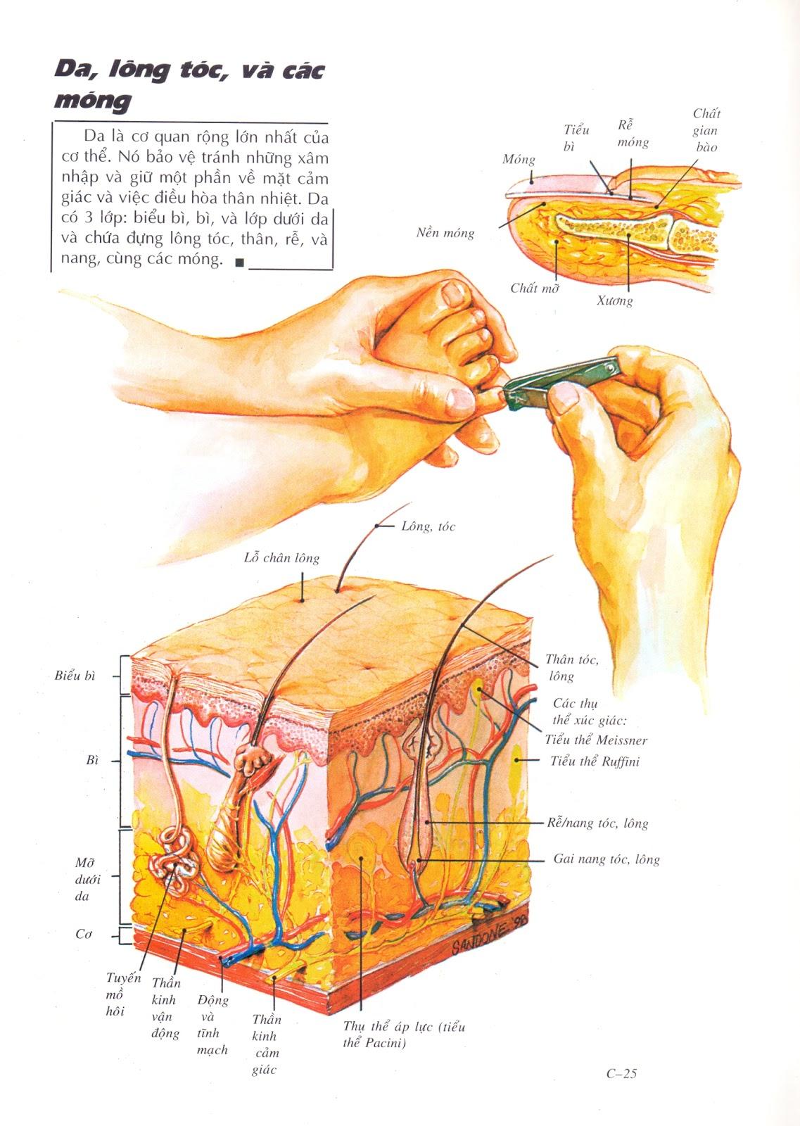 Bệnh ngoài da là nhóm bệnh phổ biến nhất trên cơ thể con người