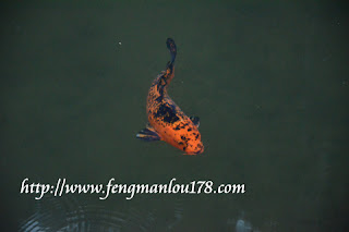 杉林溪锦鲤