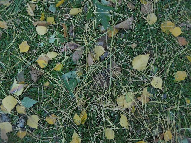 trawnik jesienią