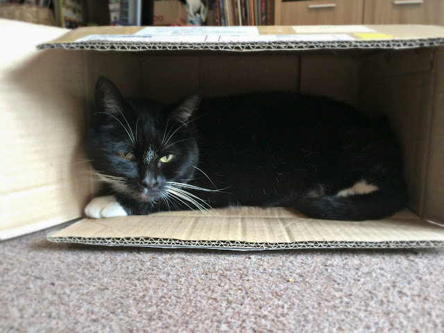 black and white cat in a box