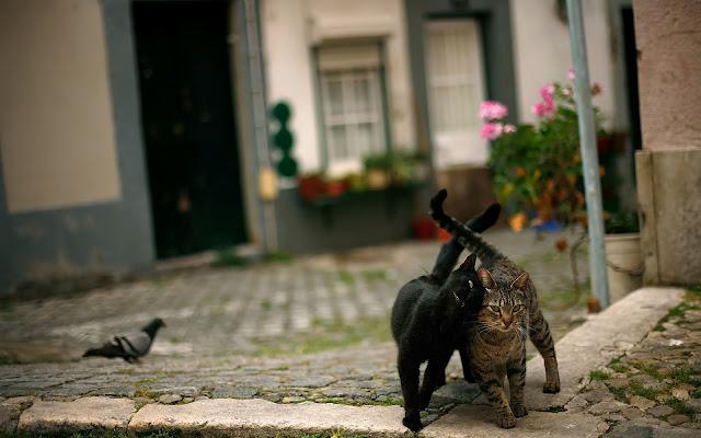 Twee katten op straat