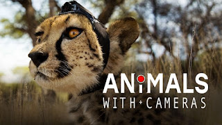 Animals with Cameras (2018) Watch online Documentary Series
