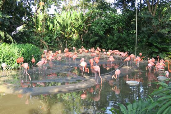 Flamingo Park em Miami