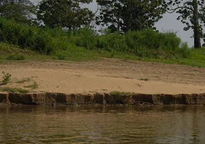 Karakteristik Tanah Alluvial: Ciri, Sebaran dan Pemanfaatannya