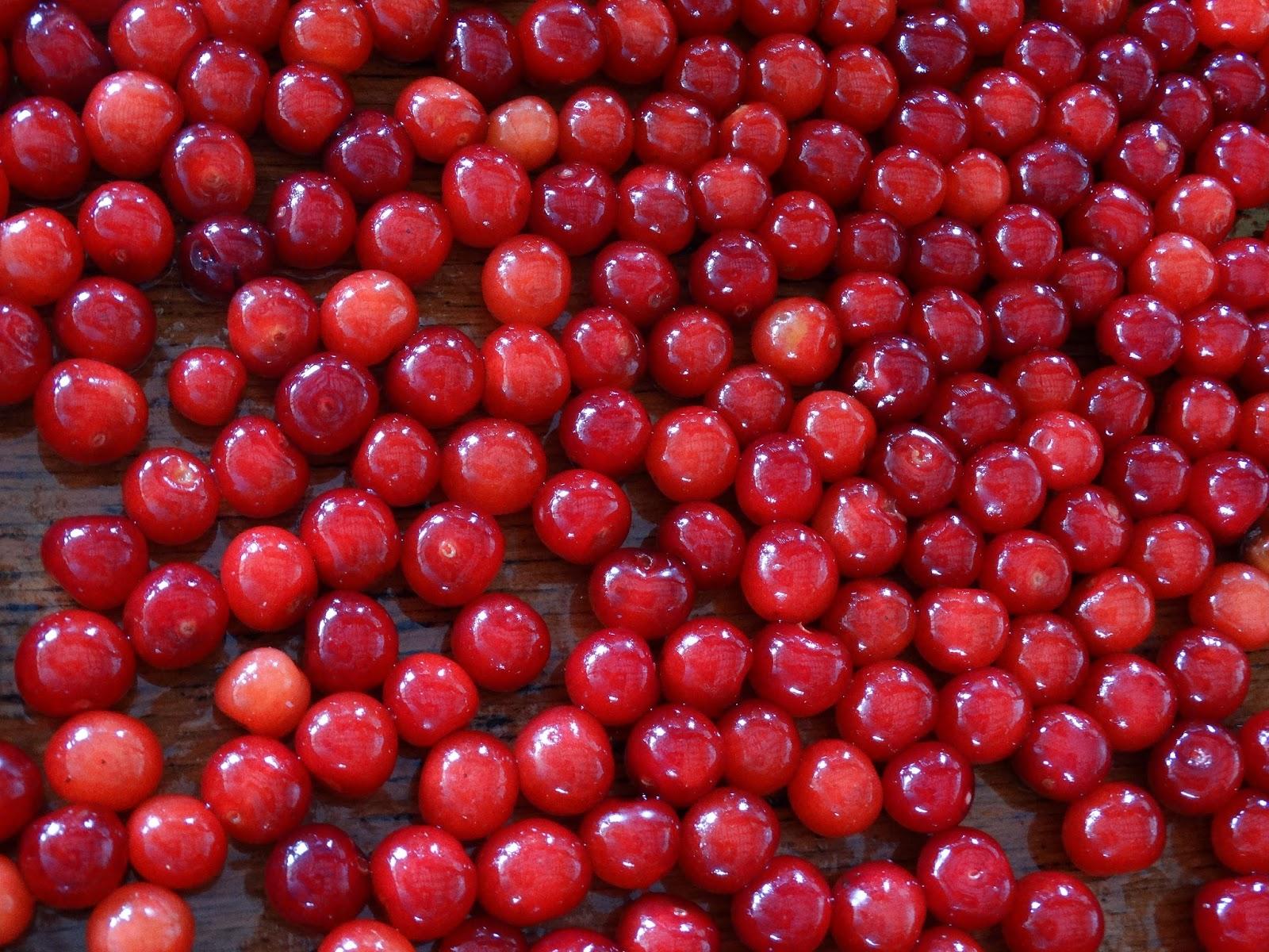 Pregnant Craving Fruit 105