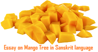 Essay on Mango Tree in Sanskrit language
