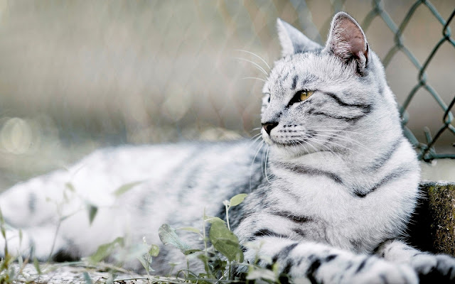 Mooie foto van witte kat