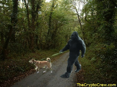 Bigfoot walking a dog