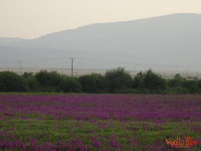 Levantica