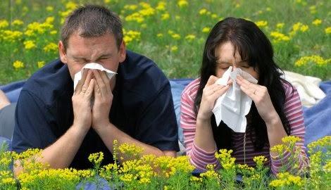 proljetna alergija, alergija na polen