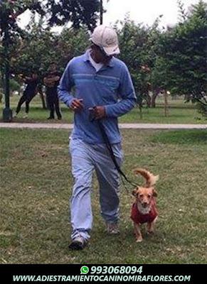 Adiestramiento Canino Surquillo