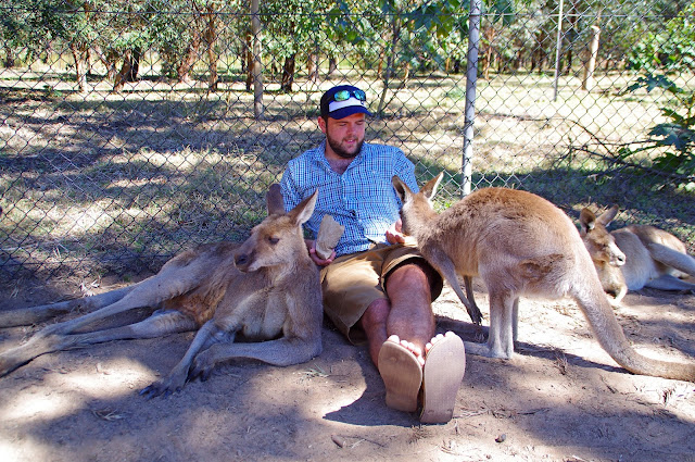Dan Chilling with the Locals at Lone Pine Koala Sanctuary