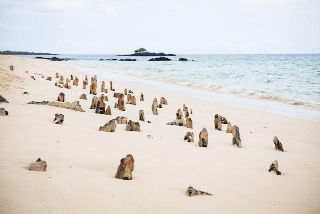 Bachas Beach 🌴
