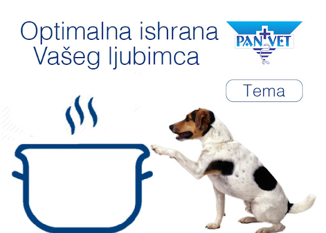 Optimalna ishrana pasa i mačaka - Panvet blog